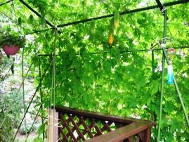 『「緑のカーテン」とは02』の画像