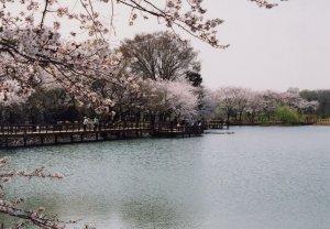 『太田ヶ谷沼』の画像