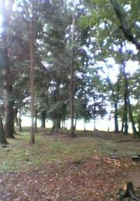 武蔵野の雑木林の風情を持つ第2号羽折稲荷神社市民の森