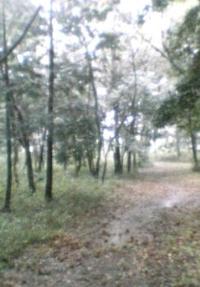 野鳥も見られ散策に適した第4号高徳市民の森