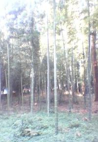 あざやかな竹林がひろがる第5号五味ヶ谷市民の森