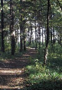 木漏れ日の中、散策したくなる第6号高倉うきうき市民の森