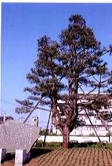 『地名「鶴ヶ島」発祥の地』の画像