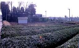 『川崎平右衛門陣屋跡』の画像