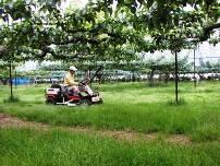 「果樹園の棚下で牧草を栽培し、雑草を防ぐ。」の画像