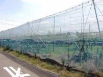 「果樹園を網で覆い、害虫の侵入を防ぐ。」の画像
