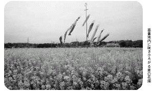 『高倉地内に咲きひろがる菜の花畑』の画像
