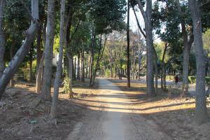 『富士見緑地(西側)』の画像
