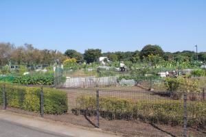 『鶴ヶ島の楽しみ方(市民農園)』の画像