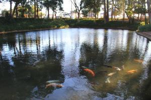 『雷電池児童公園(鯉泳ぐ雷電池)』の画像
