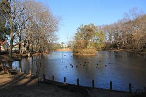 『池尻池公園(池全景)』の画像