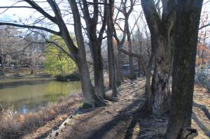 『池尻池公園(園道)』の画像