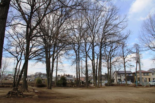『どんぐり公園(全景)』の画像