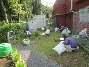『除草作業の様子』の画像