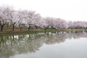 『春夏秋冬02(サムネイル)』の画像