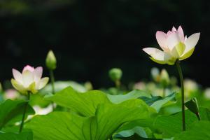 『春夏秋冬04(サムネイル)』の画像