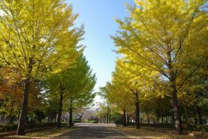 『春夏秋冬06(サムネイル)』の画像
