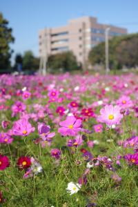 『春夏秋冬07(サムネイル)』の画像