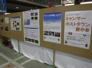 『ホストタウン展示会(1)』の画像