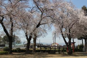 『稲荷公園(桜)』の画像